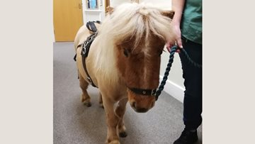 Bexhill-on-Sea care home welcomes four-legged friend