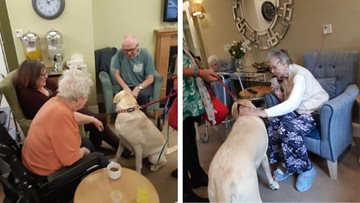 Charlie the Labrador makes a 'pawsome' visit to Stockport care home
