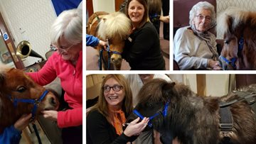 Therapy ponies visit Dunfermline care home