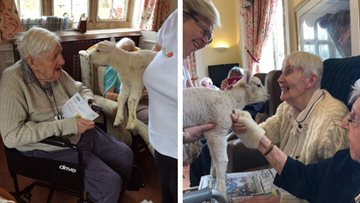 Little lamb visits Bridport care home