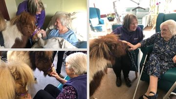 Therapy ponies visit Stornoway care home