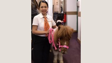 Four legged Valentine's at Crieff care home