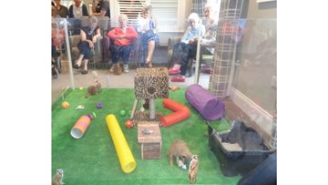 Meerkats pay a visit to St Clare's Court