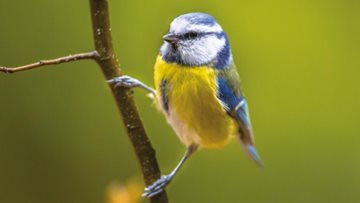 Take part in Big Garden Birdwatch at Warrington care home