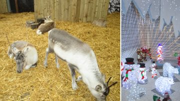 Residents pay Rudolph a visit on festive outing