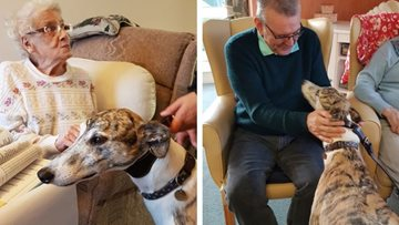 Redcar care home Residents meet former racing greyhound