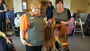 Therapy Ponies delight at Swallownest