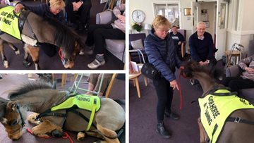 Barnard Castle care home Residents meet UK's first guide horse