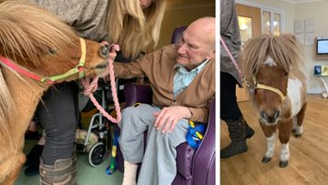 Horsing around at Wigan care home