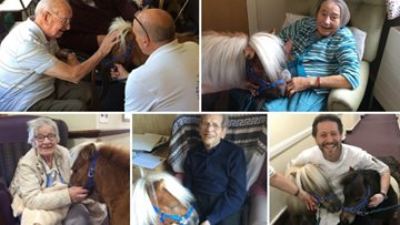 Therapy Ponies Scotland visit Edinburgh care home