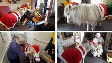 Festive cheer is all around as Sheffield care home welcomes new furry friend