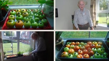 Longport care home Resident grows tomatoes