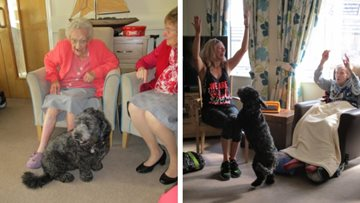 Archie the cockapoo brings joy to Hinckley Park Residents