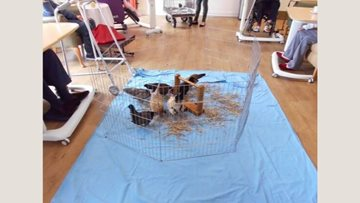 Pet Pals come to Coppice Court