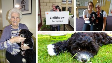 Puppy love at Linlithgow care home