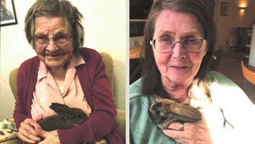 Three new resident bunnies at Huntingdon home