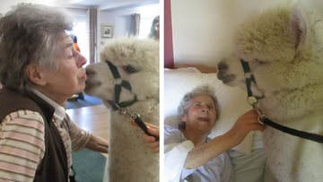 Alpacas put a smile on Residents faces