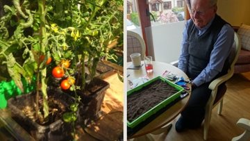 Dunfermline care Residents see the fruits of their labour as greenhouse vegetables sprout