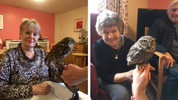 Feathered friends visit Rose Court
