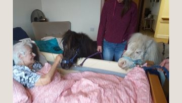 Burntwood care home welcomes Lollipop ponies