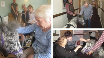 Pony therapy at Paisley care home