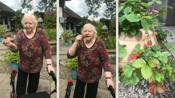 Fort William care home Residents enjoy home grown strawberries