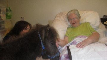Therapy ponies visit Stafford care home