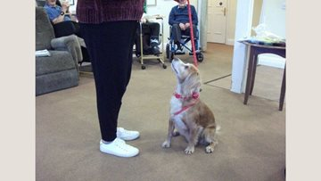 Bridport care home hosts dog show