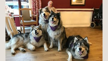 Willow Court welcomes furry guests for afternoon of cuddles