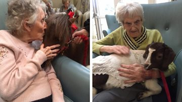 Animal therapy at Liverpool care home