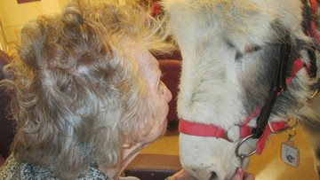 Doodles the Donkey Visits Residents at Aberford Hall