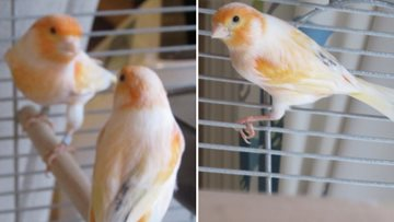 Residents welcome new feathery friends to home