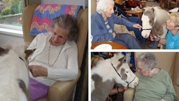 Pony therapy at Penrith care home