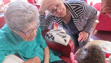 Hedgehog rescuer visits Leicester care home