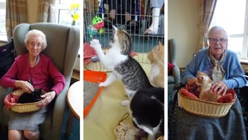 Kitten cuddles at Bexhill-on-Sea care home