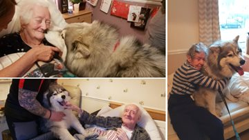 Thunder the Therapy Husky pays visit to Swallownest Residents