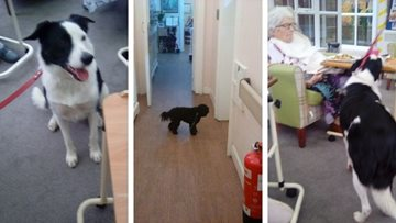 Belper care home celebrates National Love Your Pet Day