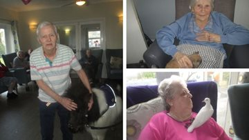 Residents welcome new furry friends at Swansea care home