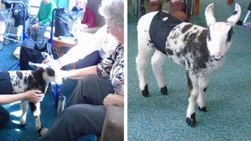 Furry visitors at Sussex care home