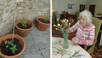 Tetbury care home grow beautiful sunflowers