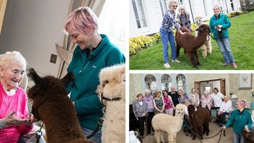 Alpacas visit Henley-on-Thames care home